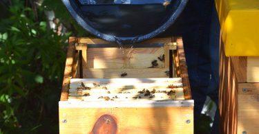 Honigernte Imker