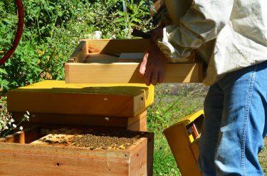 Honig Bienenstock Berlin